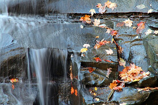 Autumn Is Here by Jeff  Burns
