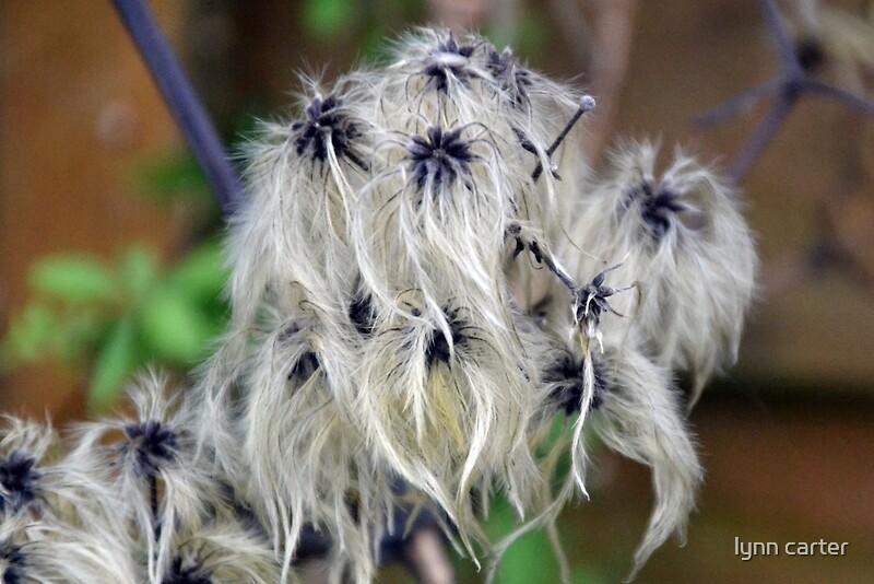 Hairy Seeds 82