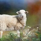 I know My sheep and Mine know Me by Bonnie T.  Barry
