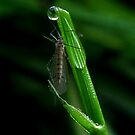 The Drop and the Grasshopper... by Sandeep Tattamangalam