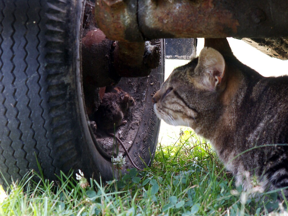 Rossi with a mouse under the tractor by TE4SE