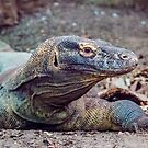 Komodo Dragon by Glen Allen