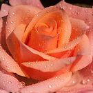 My Birthday Rose by JennyRainbow