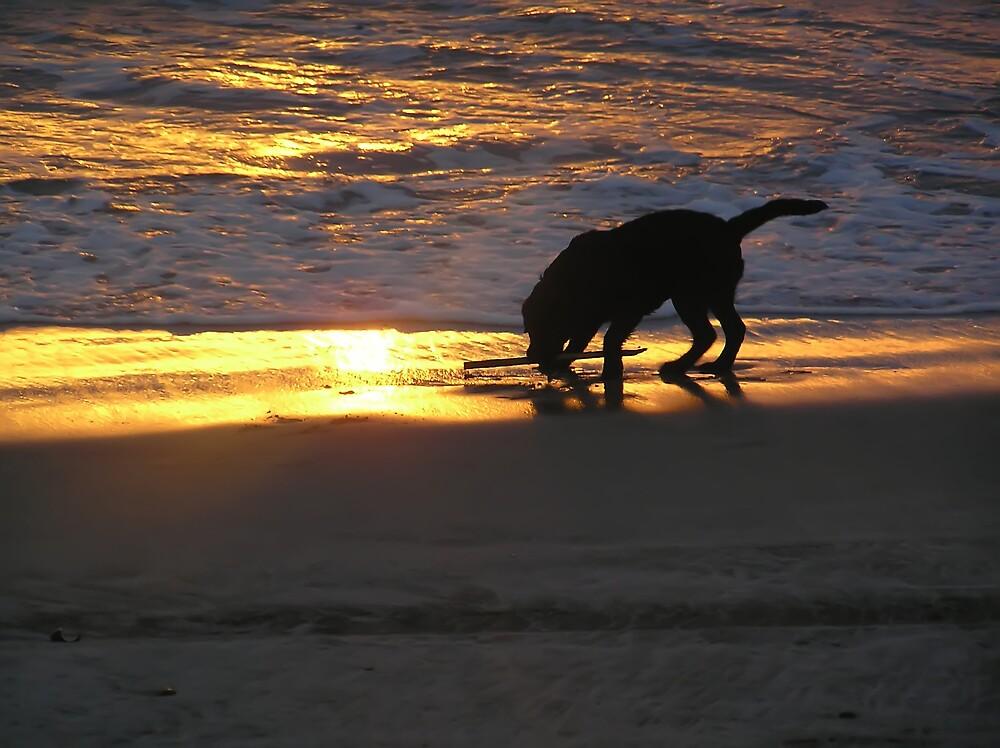 Sunset Fetch by Chuck Cannova