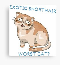 Exotic Shorthair- worst cat? Canvas Print