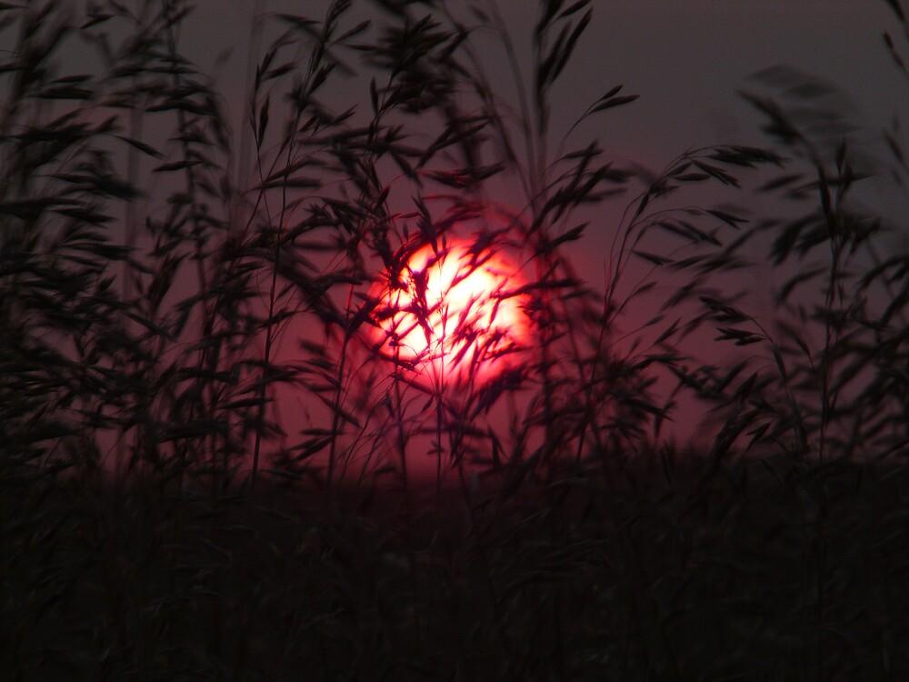 Summer Red Wind by Geoffrey