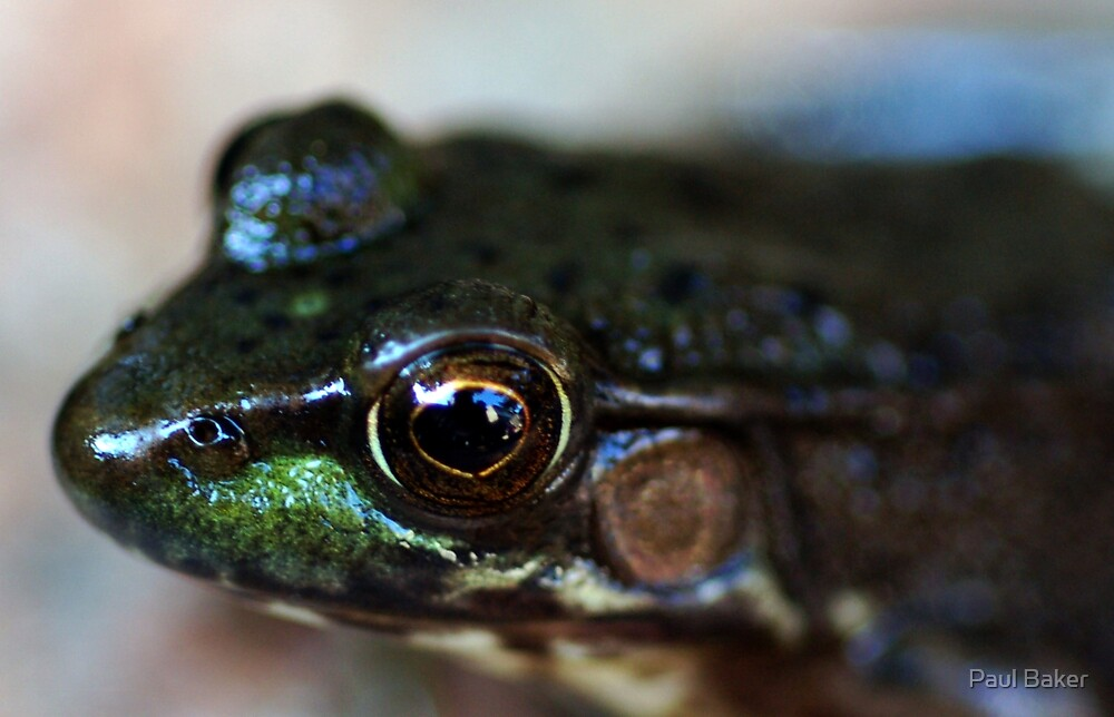 Peeping Toad by Paul Baker