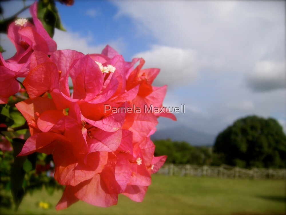 Beauty on the Edge by Pamela Maxwell