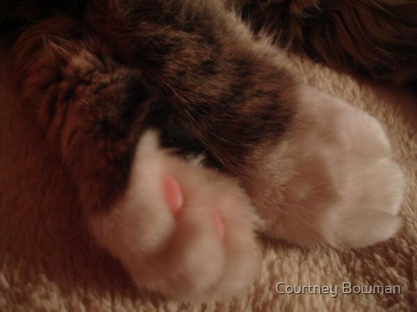 small paws by Courtney Bowman