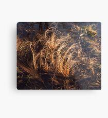 Nova Scotia Grasses Metal Print