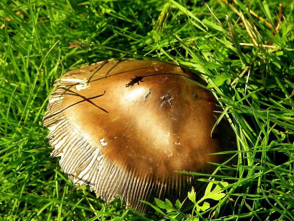 Bronze Medal Mushroom by victoriaG