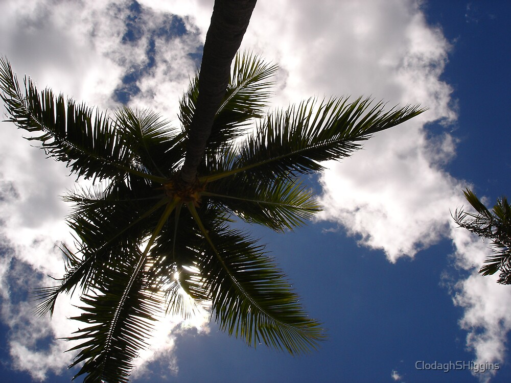 Under the Palm Tree in Hawaii 2005 by ClodaghSHiggins