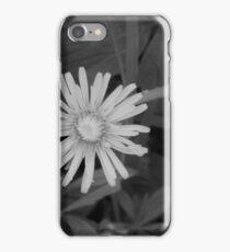 Dandelion in grey scale iPhone Case/Skin