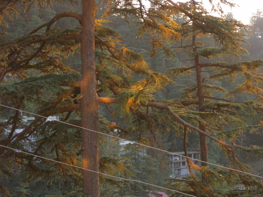Trees with Light! by barkha