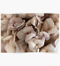 Macro photo of bouquet of dry flowers. Poster