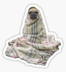 Pugs in a Blanket Sticker