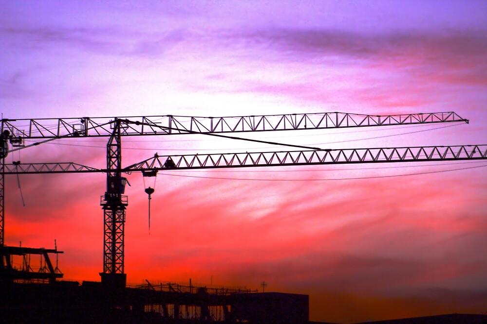 Cranes in the sunset by Johann  Koch