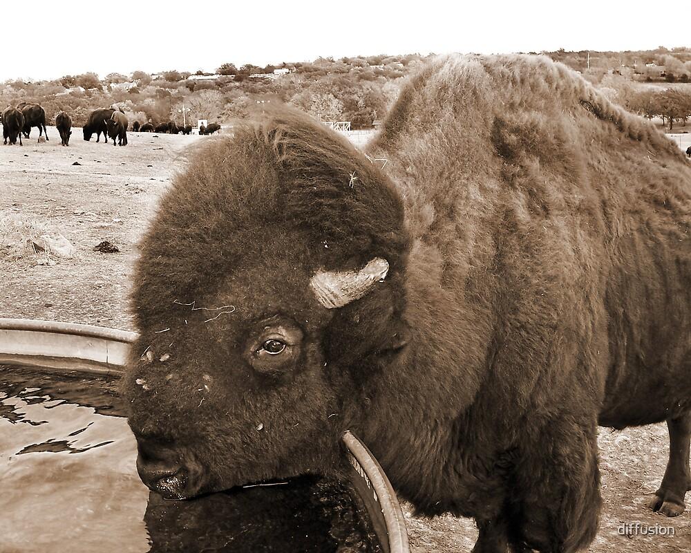Buffalo Bill by diffusion