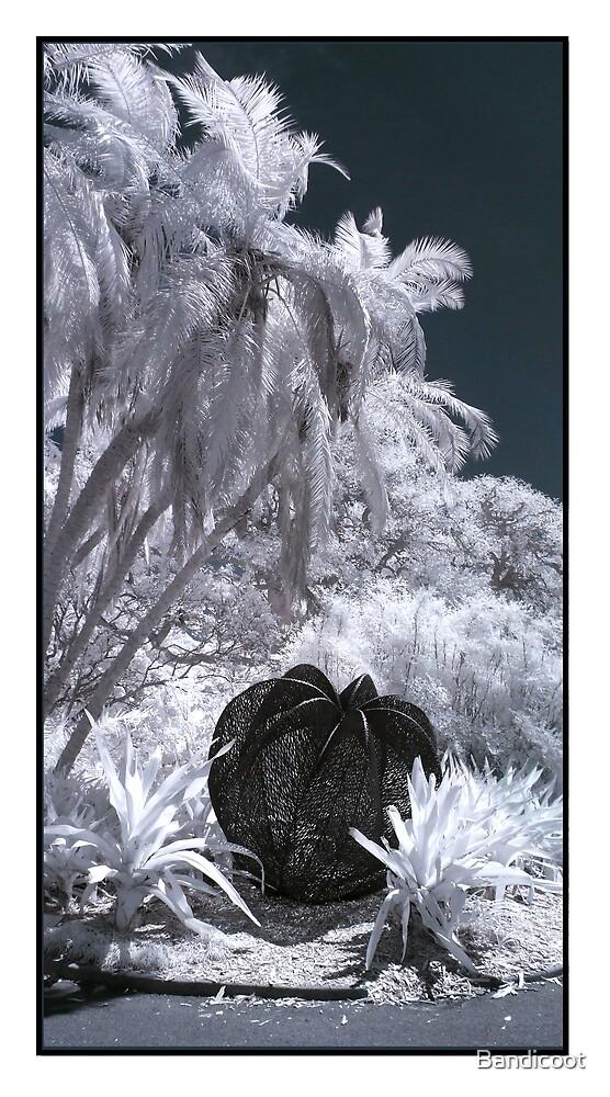 Botanic by Bandicoot