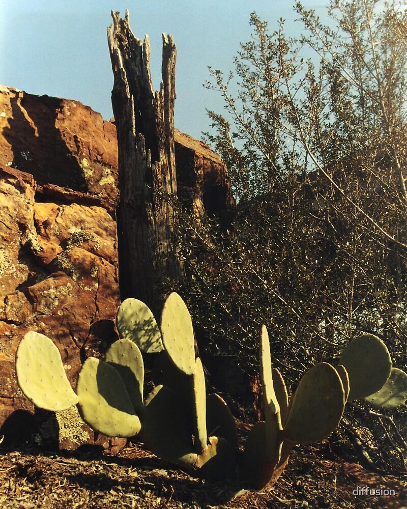 Cacti by diffusion