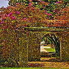 Bougainvillea Path by photorolandi