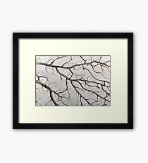 Macro photo of a dry gorgonian coral Framed Print