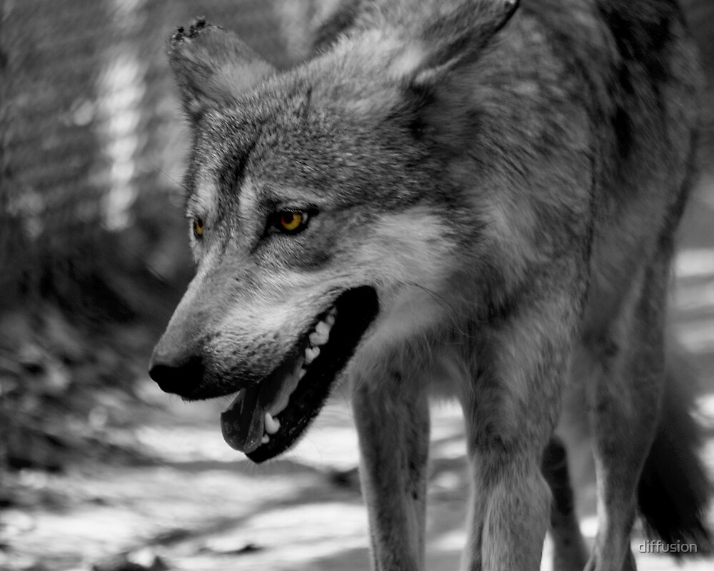 Wolfing Around by diffusion