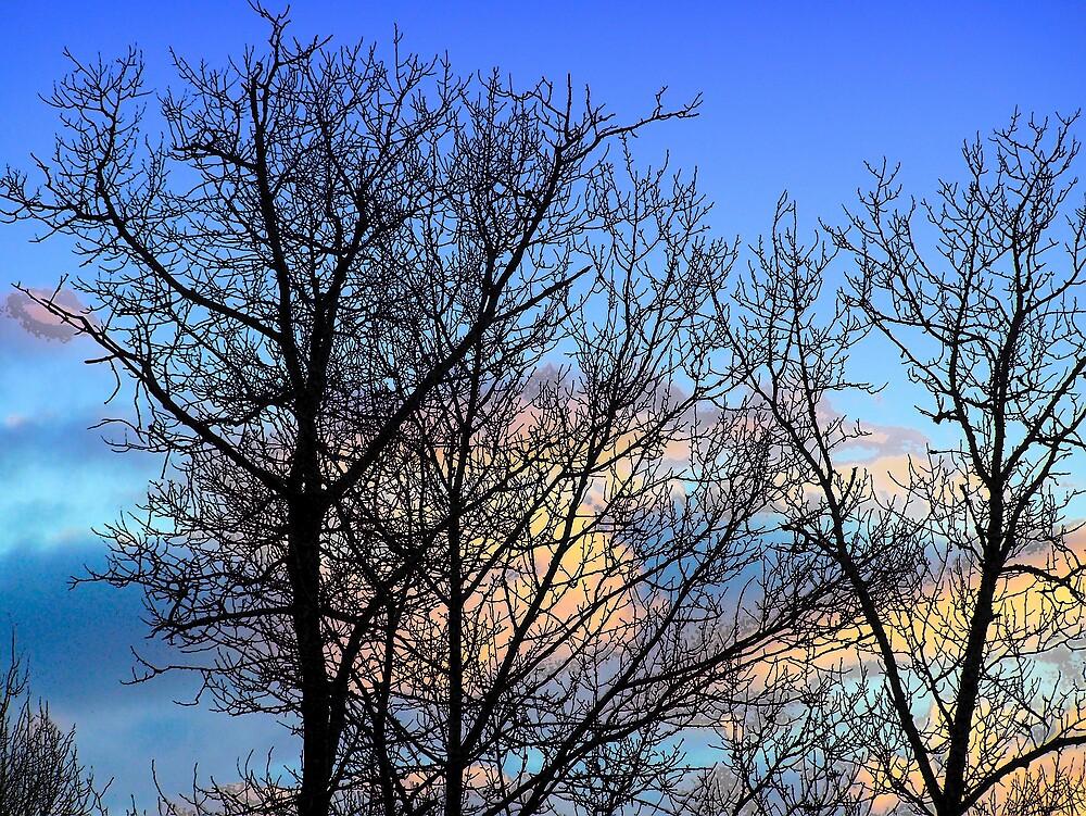 Forest Sunset by Gene Cyr