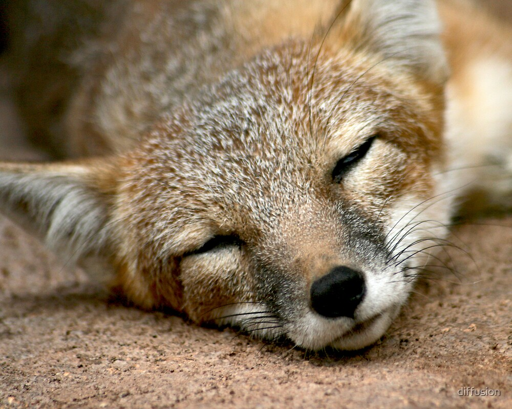 Foxy by diffusion