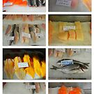FISHMONGERS CHOICE by ©The Creative  Minds