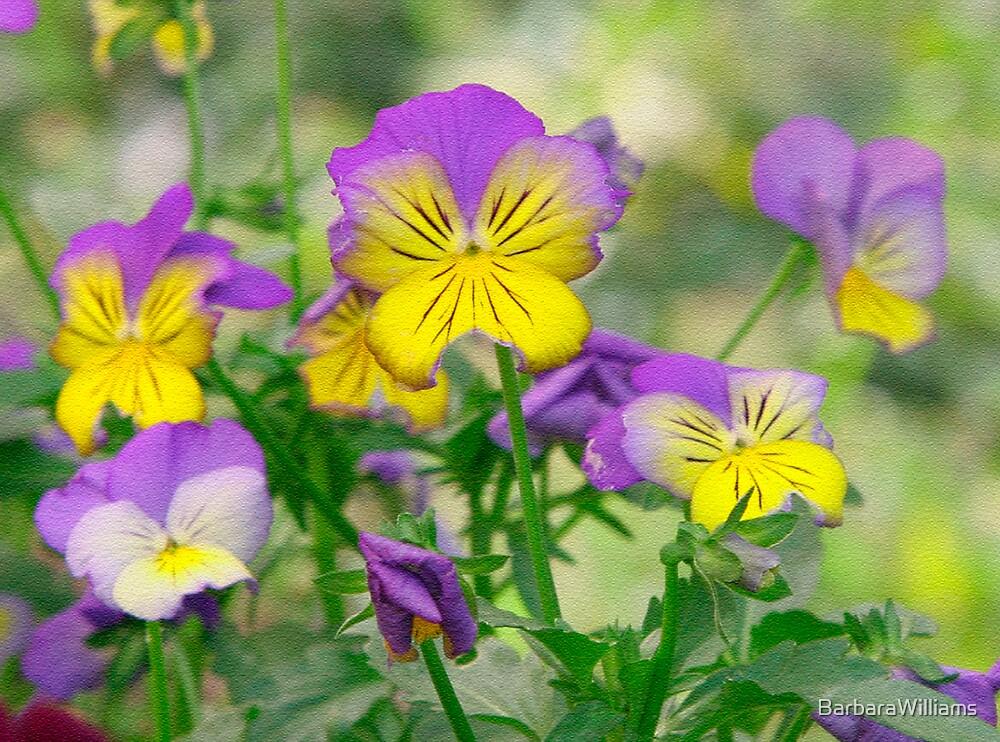 Flower by BarbaraWilliams