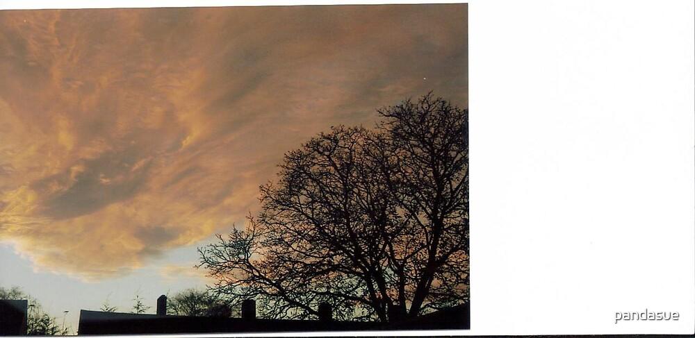 evening sky by pandasue