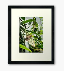 Brown Butterfly with Eye Framed Print