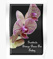 Gratitude Brings Peace For Today Poster