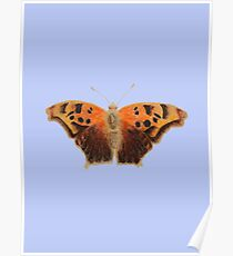 Question Mark Butterfly on Sky Blue Poster