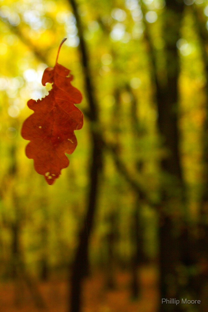 Suspended Leaf by Phillip Moore