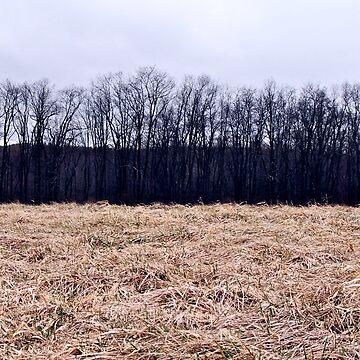 Fields by galziariart