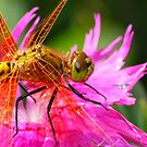 The  Insect World by Geoffrey