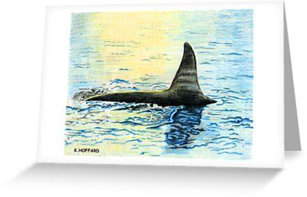 Killer Whale by Hoffard