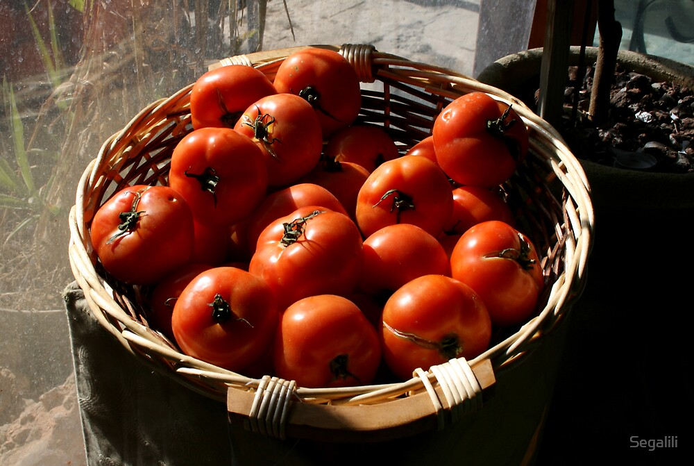 Tomatoes by Segalili