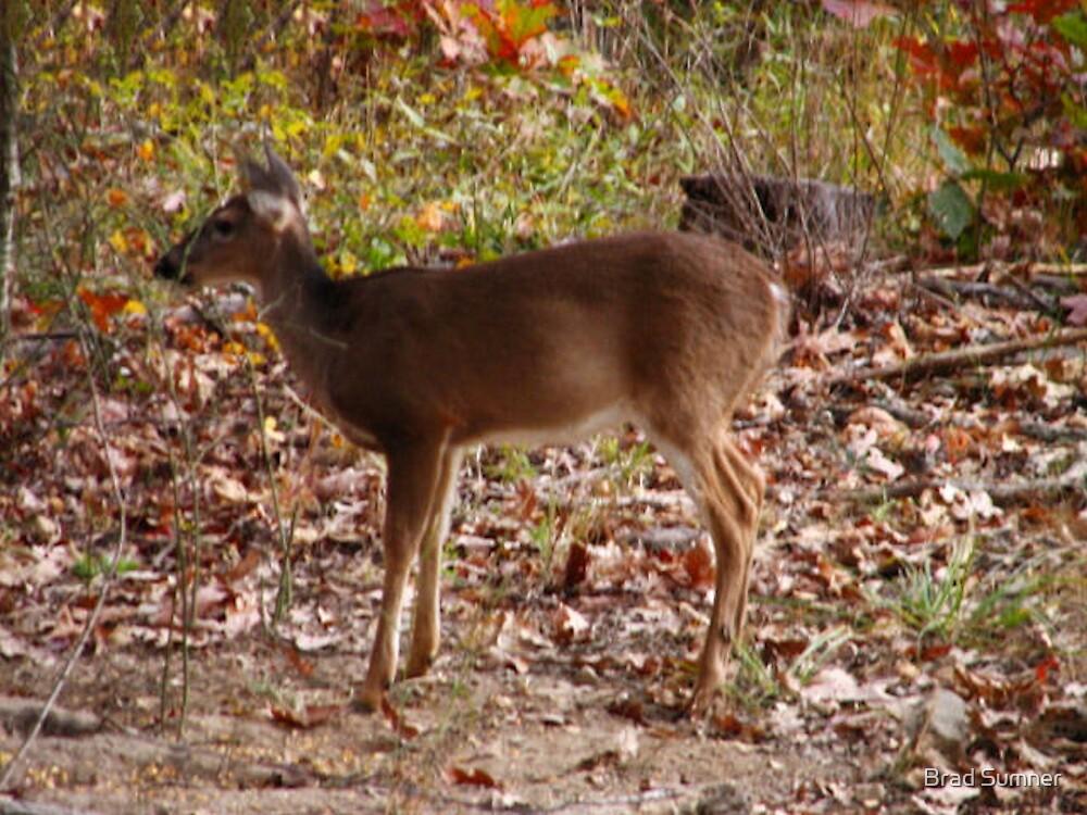 Deer in the Woods by Brad Sumner