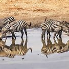 Zebra Reflections by Linda Gregory