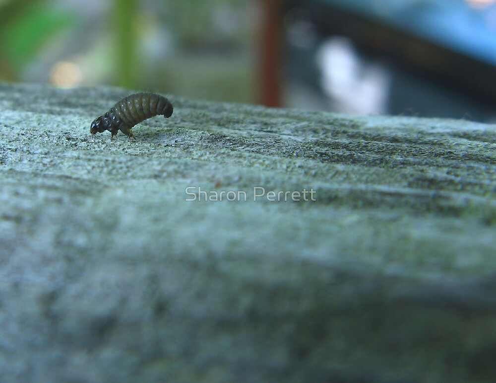 What's that bug ??? (2) by Sharon Perrett