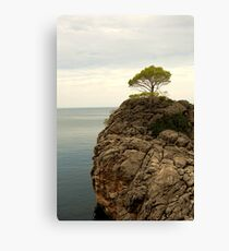 Credence Clear Water Survival Canvas Print