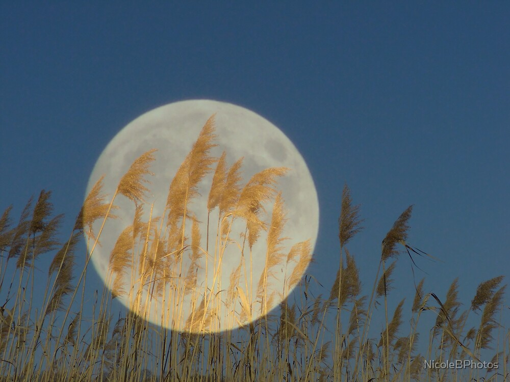 Behind - Moon & grass collage by NicoleBPhotos