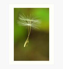 Seeds of Peace Art Print