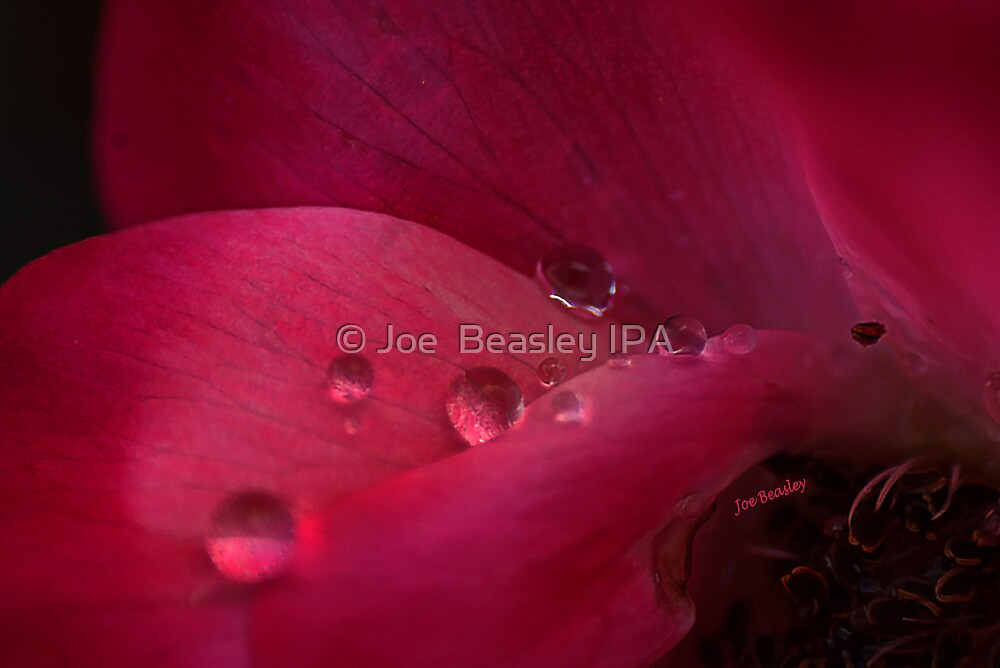Rose Water by © Joe  Beasley IPA