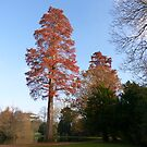 Tree in the late afternoon sun by looneyatoms