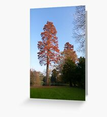 Tree in the late afternoon sun Greeting Card