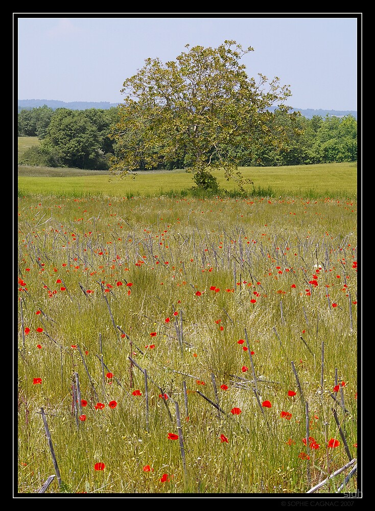 Red field by Sophie Cagnac